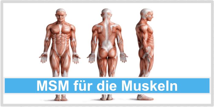 MSM für die Musekln Abbild