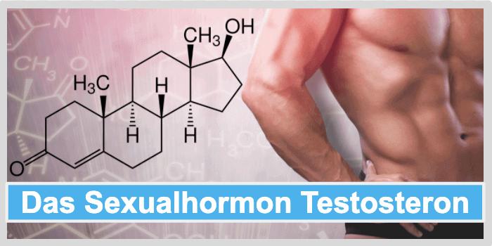 Selber herstellen testosteron Testosteron