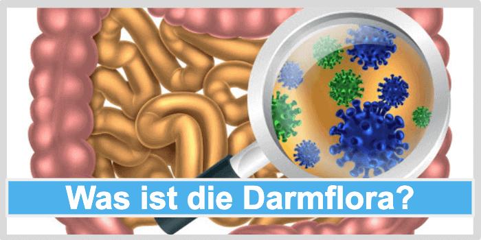 Was ist die Darmflora